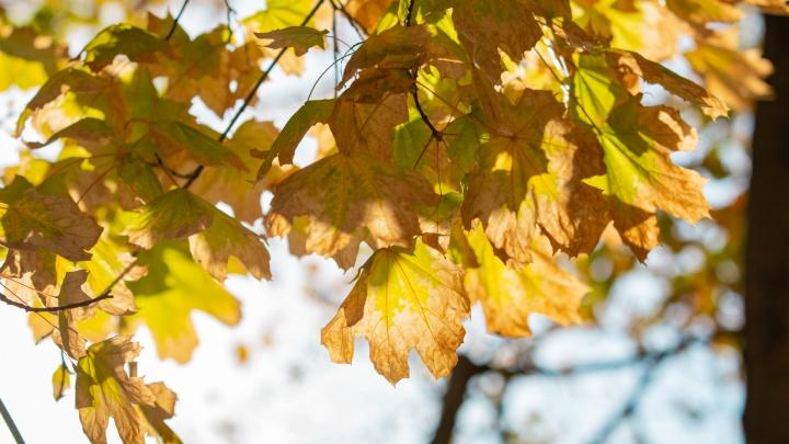 Настоящий ноябрь: какая погода ждет ростовчан в выходные