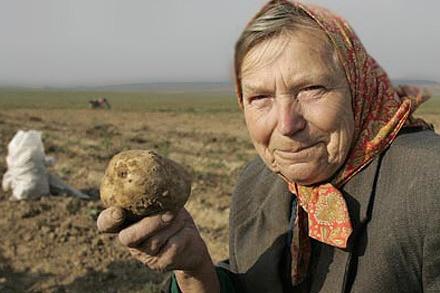 В постановлении говорится о тонне картошки и других овощей