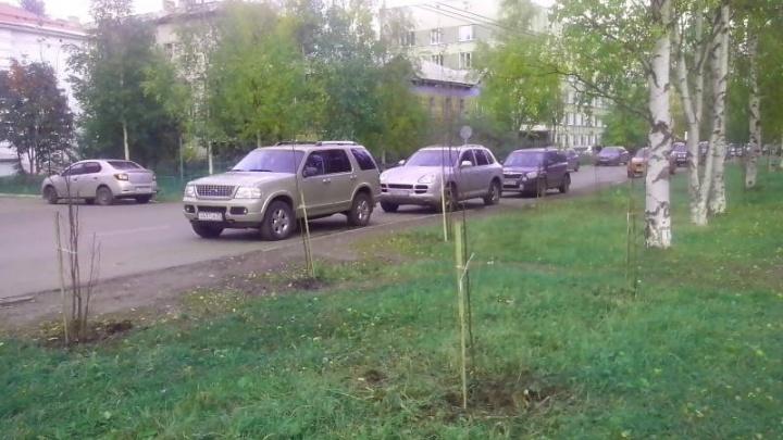 В качестве компенсации за вырубленные деревья в Архангельске посадили 250 берёз