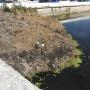 «Люди очень активно мусорят»: челябинцев возмутила очистка реки Миасс за 15 миллионов рублей