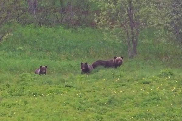 Фото сделано прошлым летом возле села Койнас — это в 15 километрах от Засулья. Там тоже боятся визитов медведей