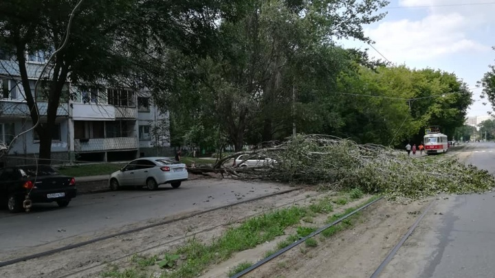 Трамваи встали в пробку: в Самаре на улице Врубеля завалилось огромное дерево