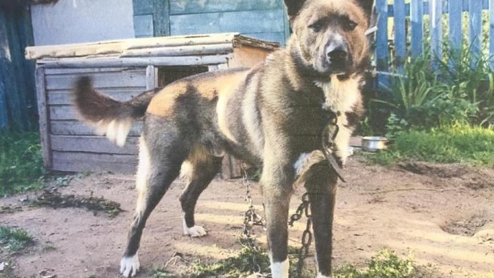 «Верните собаку на остановку»: жители Ярославля обвинили приют для животных в воровстве пса