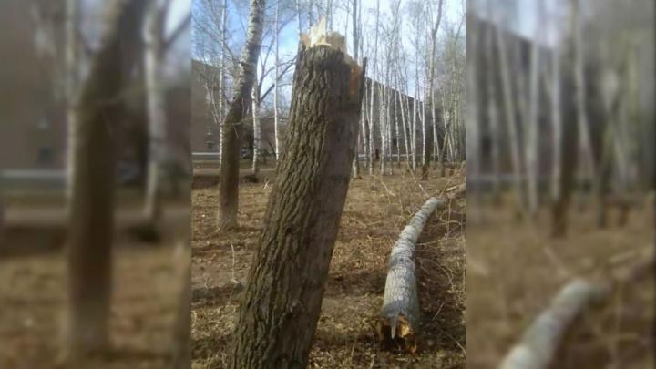 В Стерлитамаке во время урагана на женщину упало дерево