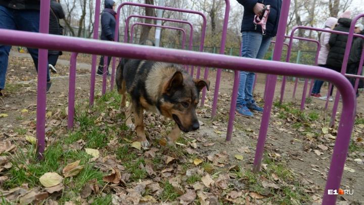 В Екатеринбурге появится новая площадка для дрессировки собак: что там будет