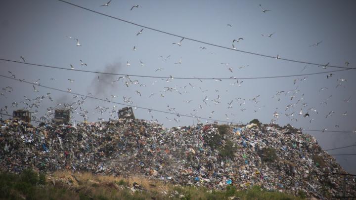 Гладко постелили: экологи усомнились в проекте превращения челябинской свалки в зелёный холм