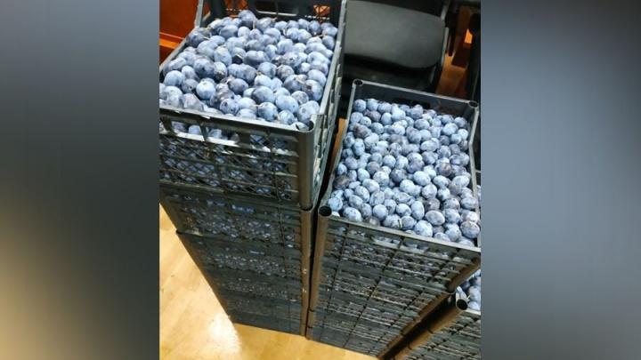 На границе Курганской области задержали почти 300 килограммов фруктов