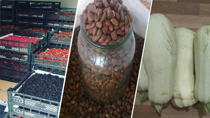 Лист малины, шишки, помидоры: на чем пытаются заработать красноярцы в сезон урожая