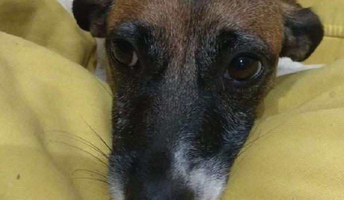 «Тут даже мой муж заплакал»: ветеринар в Волгограде до смерти заколола неродившихся щенят