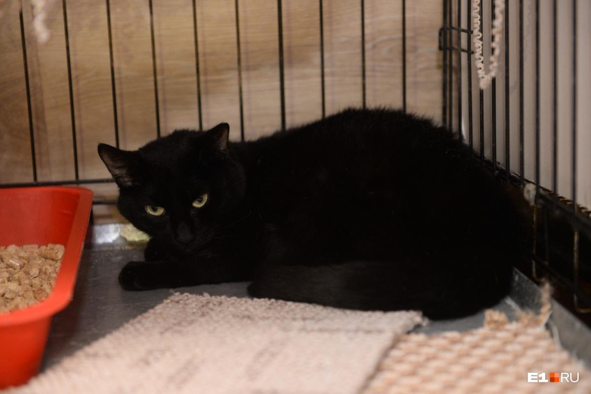 Эту красотку зовут Катана, ее нашли в подвале, у кошки был сломан таз и задние лапы