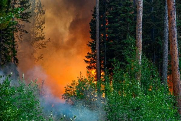 Пожары тушит авиация и пожарные на земле