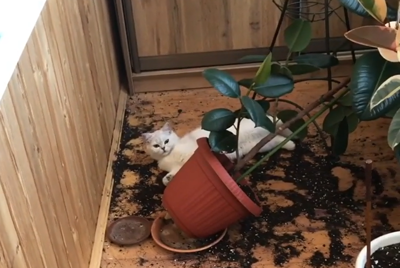 Котики — цветы жизни!