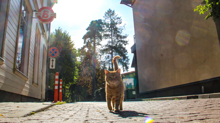 Миру — мур: отмечаем всемирный кошачий праздник