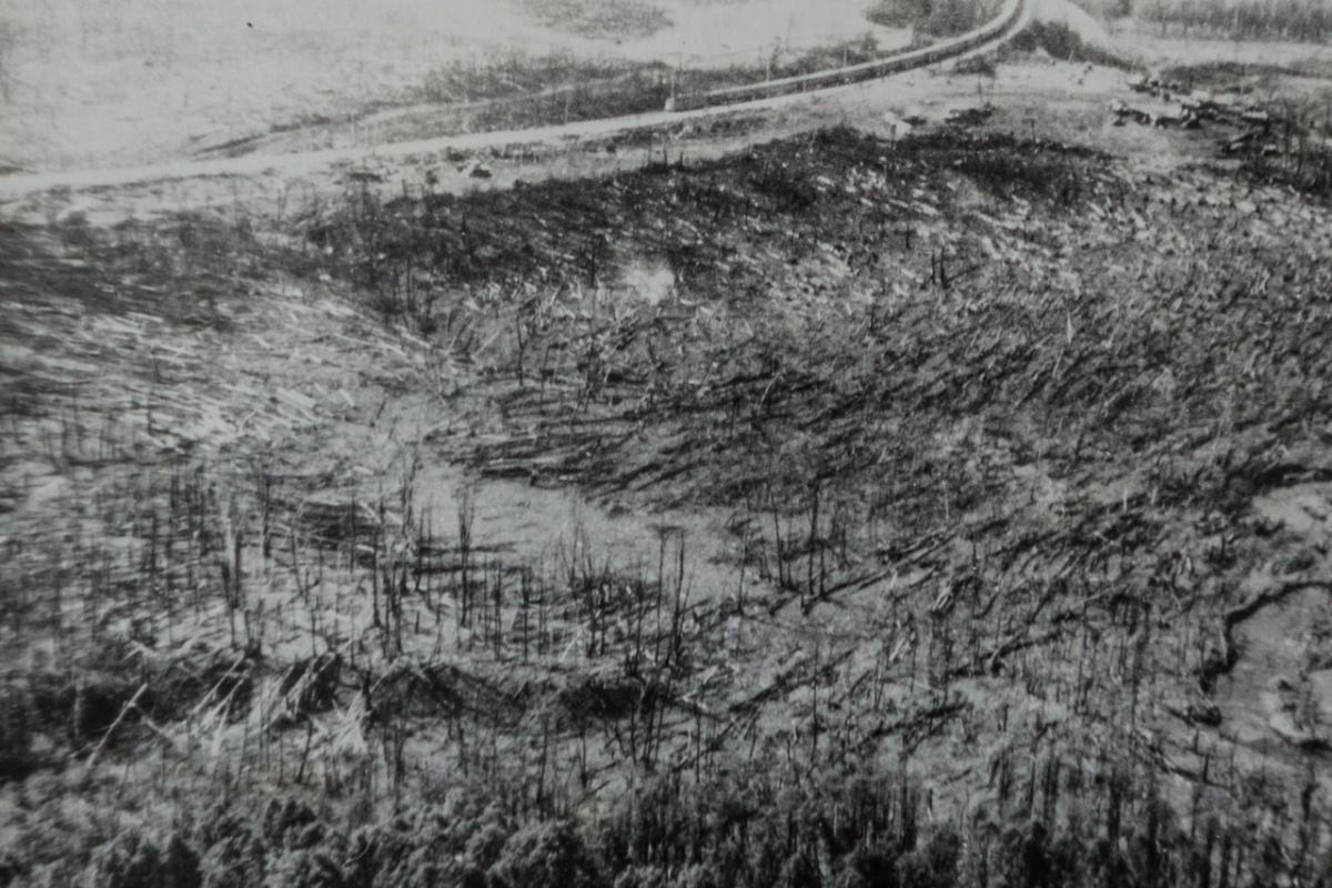 Лес повалило взрывной волной