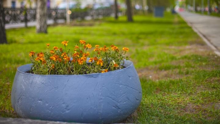 Здесь будет город-сад: в мэрии Новосибирска появится главный садовник
