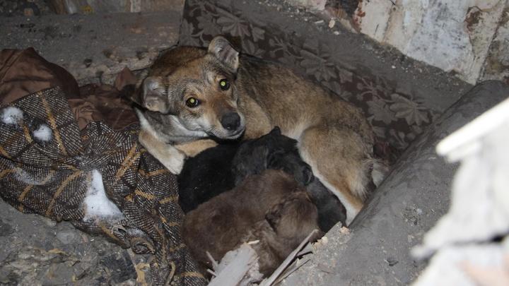 У омички, устроившей на Подгорной концлагерь для собак, снова отобрали животных