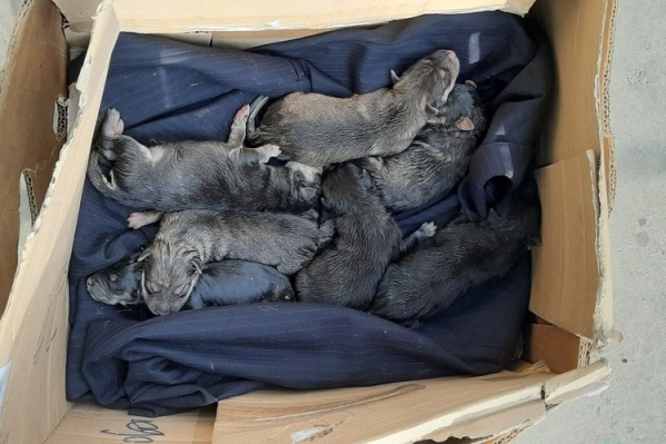 Из восьми щенков выжило семеро