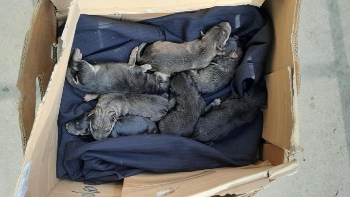 В мусорном контейнере нашли пакет с пищащими щенками