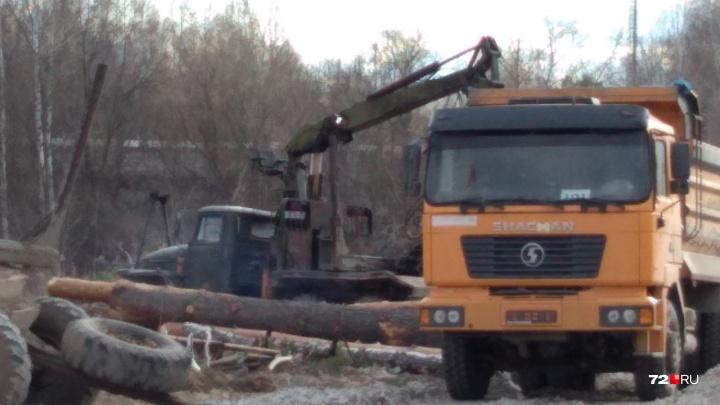 У поселка Московский вырубили часть лесополосы