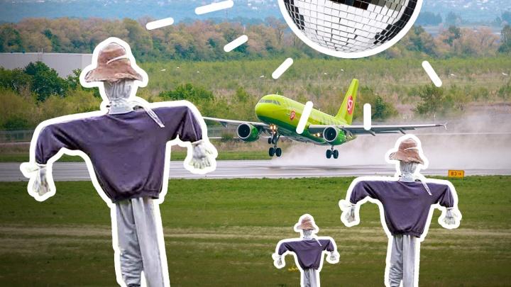 Пушка, чучело и диско-шар: как аэропорты России защищают самолеты от птиц