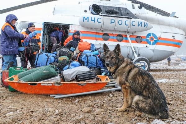 Спасатели вместе с поисковыми собаками работают на воде и на земле, занимаясь поисками пропавших без вести и ликвидируя последствия катастрофы