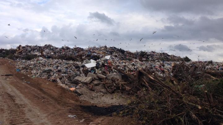 Власти Ростовской области рассказали, когда уберут мусорный полигон на Западном
