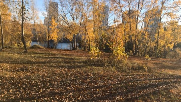Тёплые и солнечные выходные приходят в Красноярск