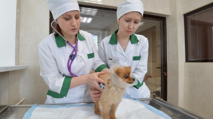 Подарок братьям меньшим — в октябре владельцы животных получат льготное ветеринарное обслуживание