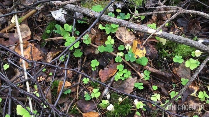 Трех заблудившихся грибников за сутки вывели из леса спасатели