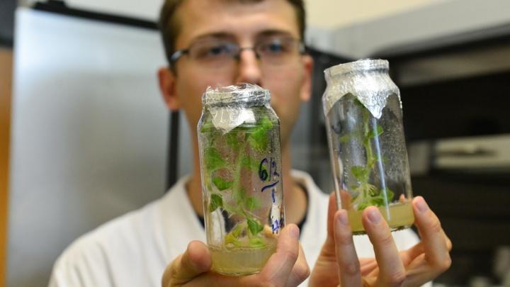 Почему трава зелёная? В Екатеринбурге впервые устроят проверку школьных знаний для взрослых