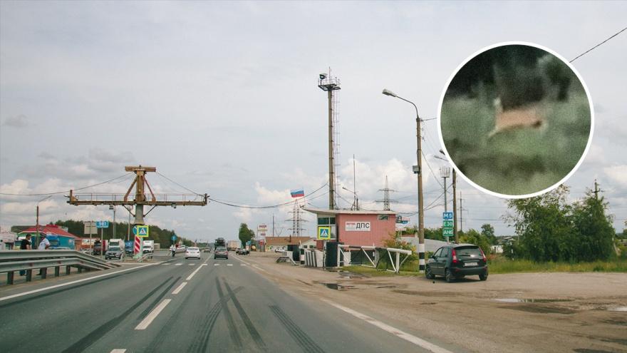 «Косули наблюдали за нами, а мы за ними»: под Тольятти сняли резвящихся животных