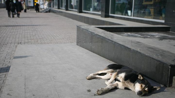 В Новосибирске появится сервис по поиску потерявшихся собак и кошек