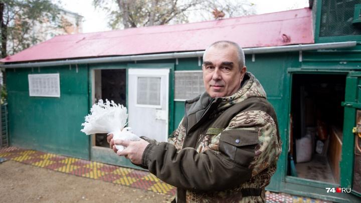 Челябинский сапожник построил голубятню во дворе многоэтажки и держит больше сотни птиц