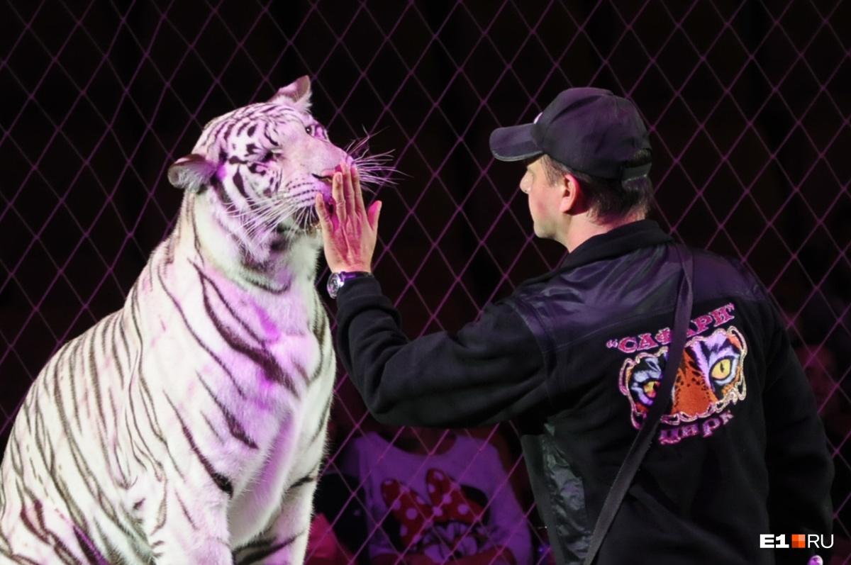В Росгосцирке считают, что цирк не получил агентское вознаграждение от структуры отца и сына Марчевских