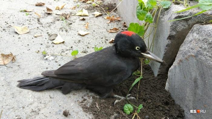 Птицу заметили в центре города, рядом с зоопарком