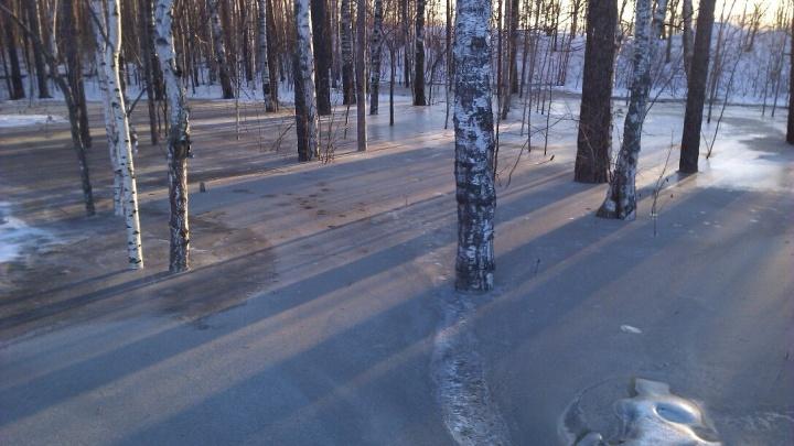 «Атомстройкомплекс» проверит зацементированный лес возле своего карьера на ЖБИ