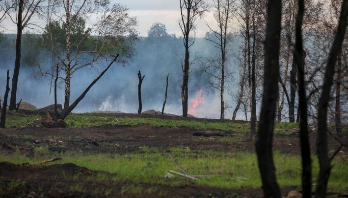 В Greenpeace подсчитали, сколько животных могло погибнуть в охваченных огнем лесах