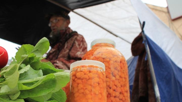 «Все плачут — урожая нет»: почему в Архангельской области мало ягод и грибов и какая на них цена