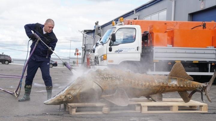 После чистки на смотровую площадку под Овсянкой вернули Царь-рыбу