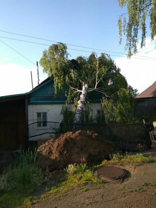 Деревья вырвало с корнями