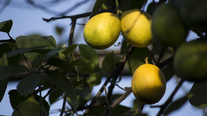 В Башкирии дорожают сезонные овощи и фрукты