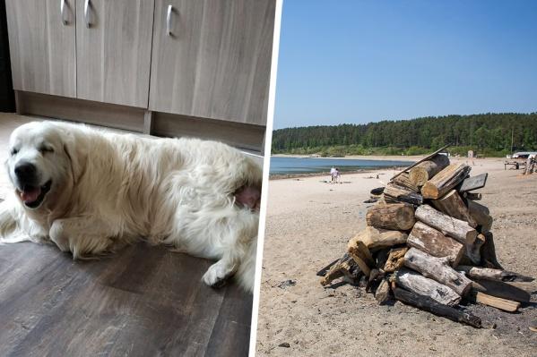 Пёс Марли часто гулял по берегу без присмотра — жители Академгородка решили, что он в опасности