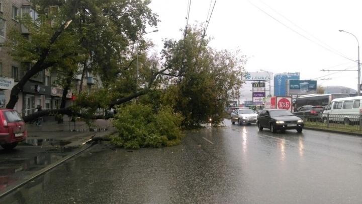 На Щербакова дерево упало на провода и парализовало движение троллейбусов