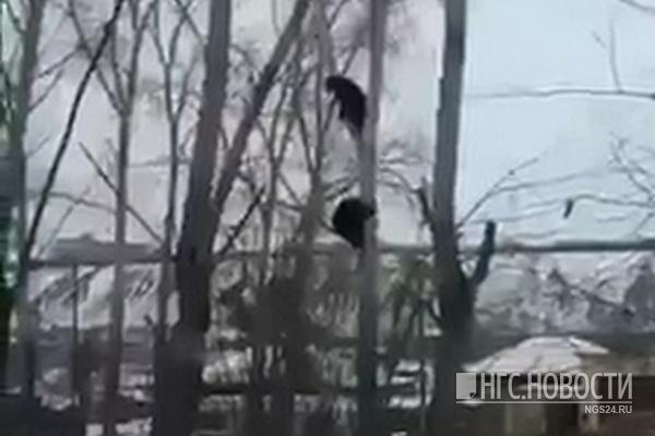 Жители рассказали, что у медвежат со Свердловской есть хозяин, и каких еще животных там выгуливают