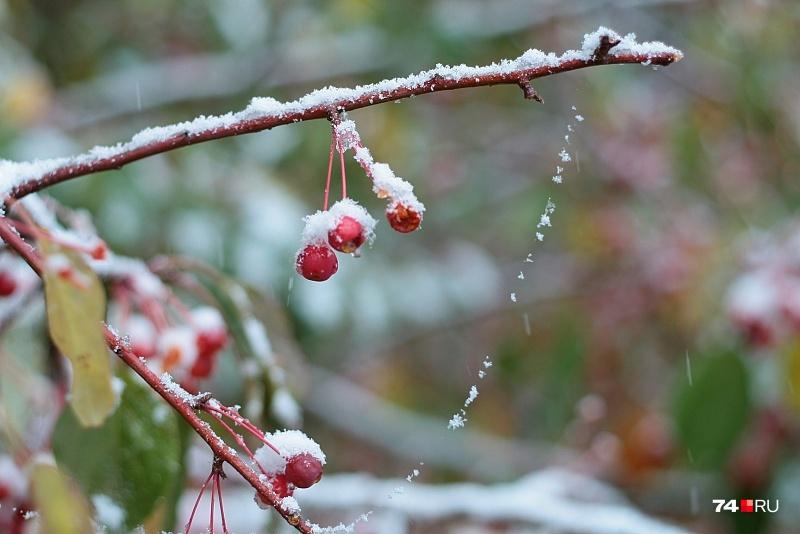 Похолодание начнётся в Челябинске, по прогнозу синоптиков, с вечера четверга
