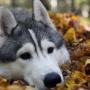 Осенние каникулы на Южном Урале: школьников пригласили в соседний регион