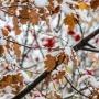Ледяной ветер и мокрый снег задержатся в Тюмени до понедельника