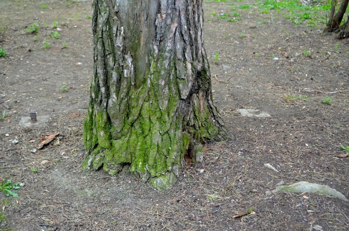 Если внимательно смотреть под ноги, когда гуляешь в Зеленой Роще, можно увидеть фрагменты древнего кладбища