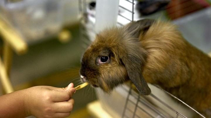 Выставка кроликов «Пушистики» продлится до 23 декабря