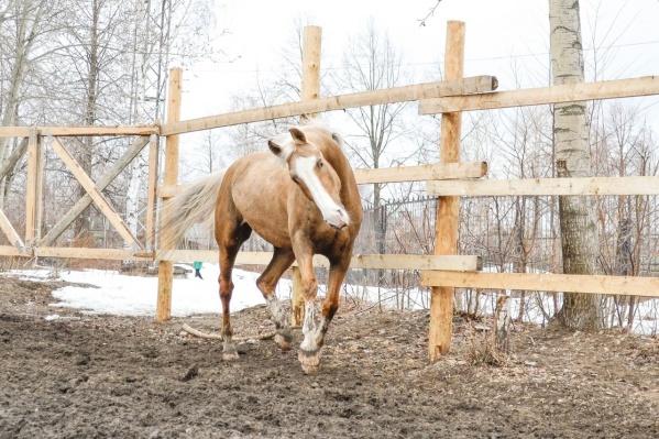 Одна из погибших лошадей